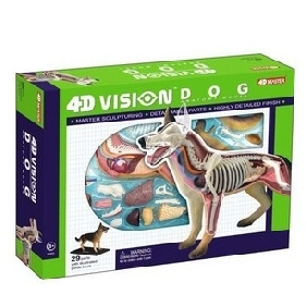 4D Master Teaching Model Series - 4D Dog Model